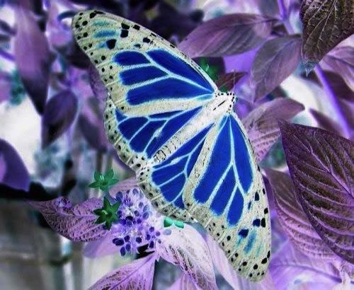 butterfly_rev_500x375